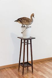georg-kargl-fine-arts2021mark-dion08an-account-of-the-collector-in-a-white-bucket-duck.jpg