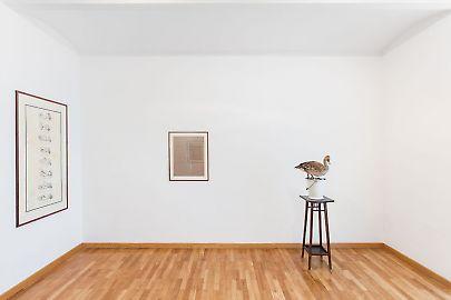 georg-kargl-fine-arts2021mark-dion21installation-view.jpg