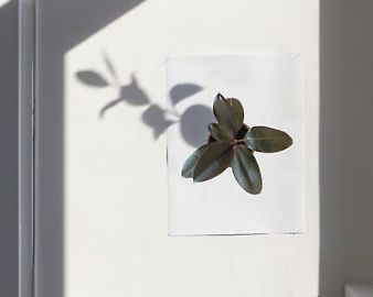 scheffknecht-plante-3.jpg