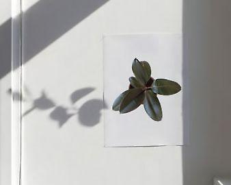 scheffknecht-plante-1.jpg