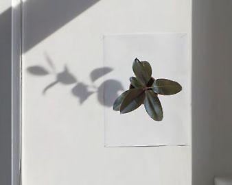 scheffknecht-plante-2.jpg